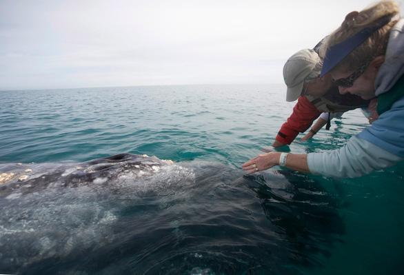 Lần đầu ghi được âm thanh của loài cá voi hiếm nhất thế giới - Ảnh 2.