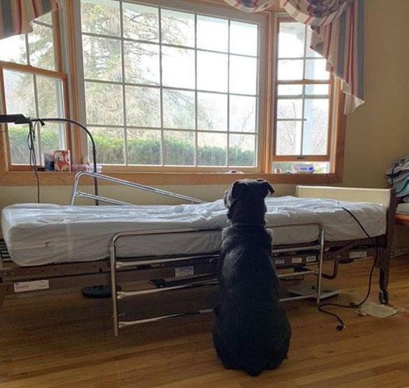 Đứt ruột hình ảnh chú chó ngồi bên giường bệnh chờ chủ đã mất - Ảnh 1.
