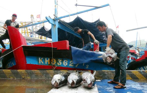 Gỡ thẻ vàng cho ngành thủy sản: Còn vi phạm có thể tịch thu tàu? - Ảnh 1.