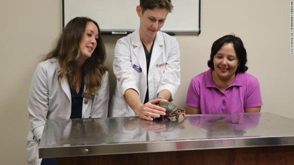 Bánh xe lăn sáng tạo cứu chú rùa khuyết tật - Ảnh 5.