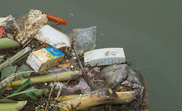 Ớn lạnh với xác heo chết, rác thải trên nguồn nước cấp cho TP Thanh Hóa - Ảnh 3.