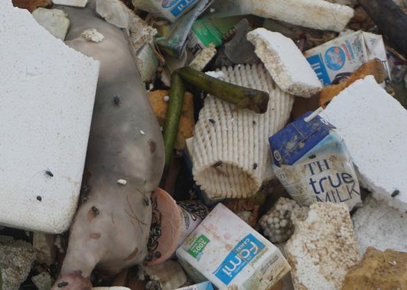 Ớn lạnh với xác heo chết, rác thải trên nguồn nước cấp cho TP Thanh Hóa - Ảnh 2.