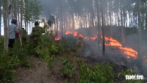 Hàng trăm hecta rừng trồng cháy ngùn ngụt cả ngày - Ảnh 2.