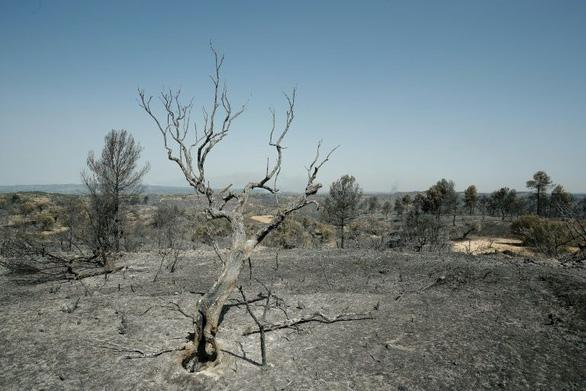 Nắng nóng ở châu Âu: Hơn 5.500ha rừng ở Tây Ban Nha bị thiêu rụi - Ảnh 3.