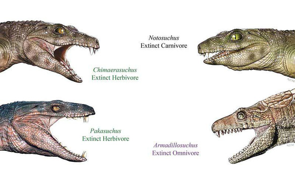 Cá sấu cổ đại vốn nằm nhấm nháp hoa quả? - Ảnh 1.
