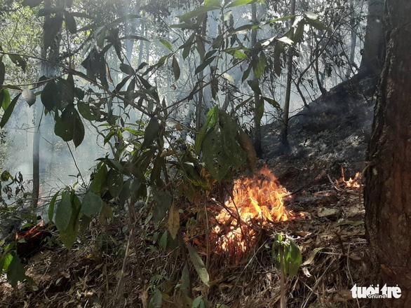 Rừng thông lại chìm trong lửa, Hà Tĩnh cấp tập di dời dân, bảo vệ trạm xăng - Ảnh 17.