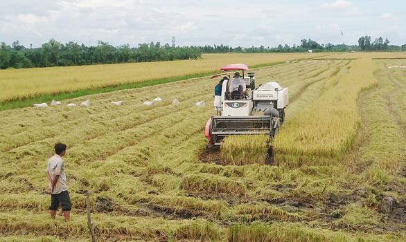 Trung Quốc giảm mua 20%, gạo Việt vẫn còn nhiều chợ mới