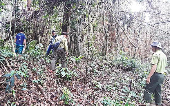 Phát hiện hơn 1.000ha rừng sâm ba kích tím tự nhiên - Ảnh 3.