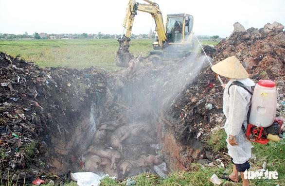 Nghệ An tiêu hủy 64 tấn heo dịch tả, chưa có kho cấp đông thịt - Ảnh 2.