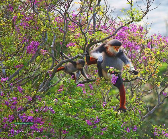 Ngắm voọc, khỉ, chim báu vật Sơn Trà - Ảnh 5.