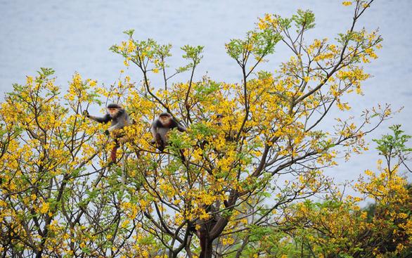 Ngắm voọc, khỉ, chim báu vật Sơn Trà - Ảnh 4.