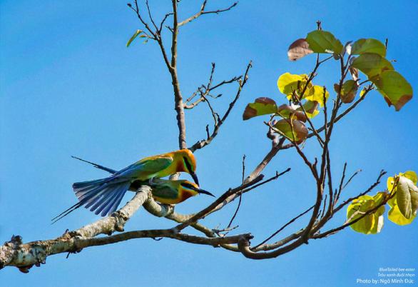 Ngắm voọc, khỉ, chim báu vật Sơn Trà - Ảnh 10.
