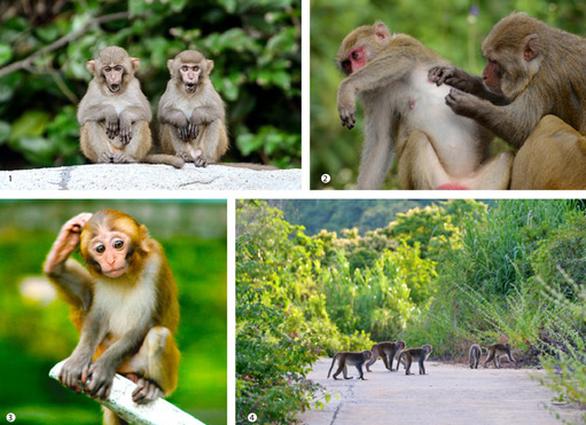Ngắm voọc, khỉ, chim báu vật Sơn Trà - Ảnh 6.