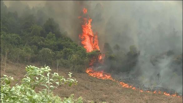 Đến lượt rừng thông ở Quảng Bình bốc cháy trong nắng nóng - Ảnh 1.
