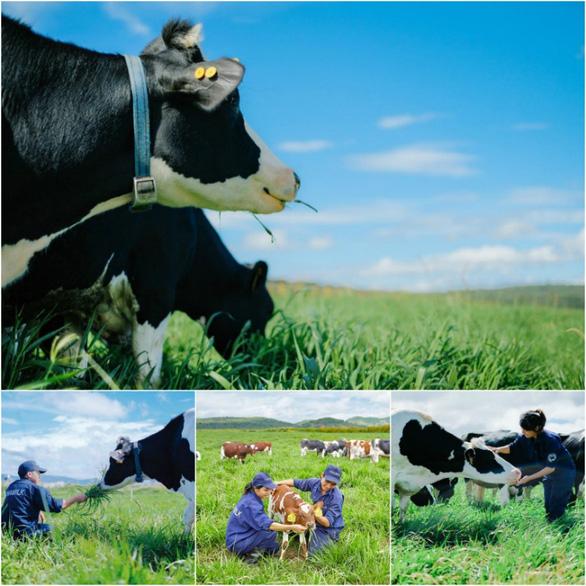 Ngạc nhiên nơi bò được chăm sóc bằng vườn thuốc nam - Ảnh 6.