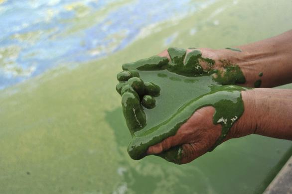 Ngày môi trường thế giới, xót xa nhìn mẹ thiên nhiên ngộp trong ô nhiễm - Ảnh 6.