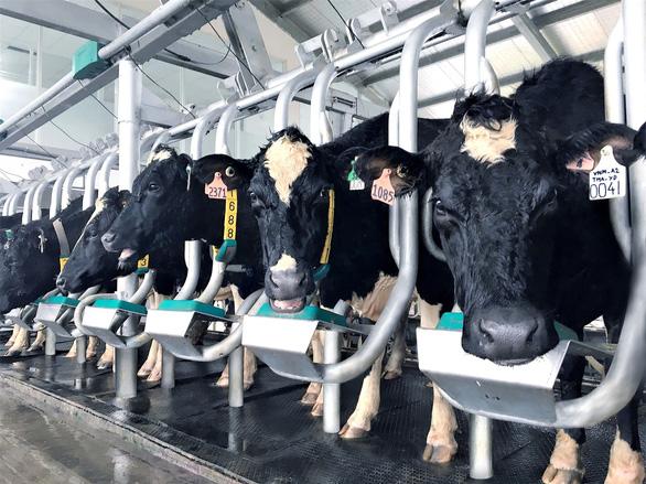 Bước đi của Vinamilk trong 30 năm phát triển ngành chăn nuôi bò sữa - Ảnh 6.