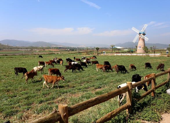 Bước đi của Vinamilk trong 30 năm phát triển ngành chăn nuôi bò sữa - Ảnh 5.