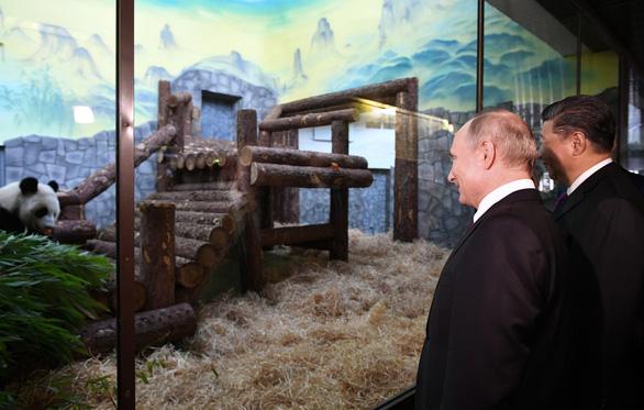 Ông Putin mỉm cười trước món quà gấu trúc của Trung Quốc - Ảnh 3.