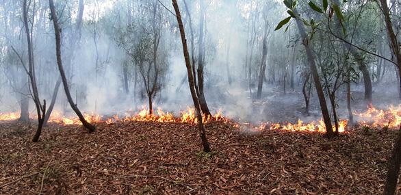 Rừng keo ở Quảng Nam bốc cháy dữ dội - Ảnh 4.