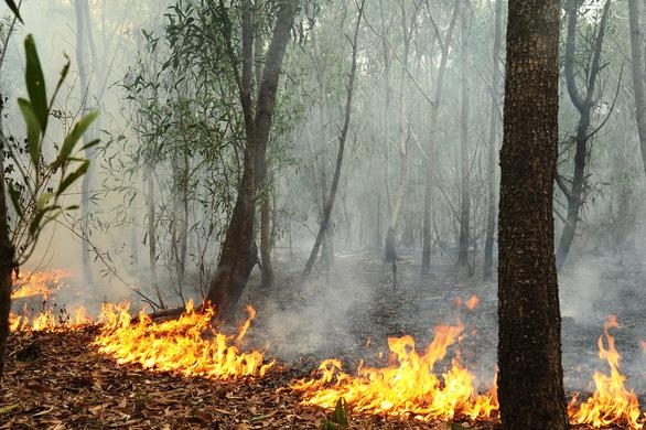 Rừng keo ở Quảng Nam bốc cháy dữ dội - Ảnh 2.