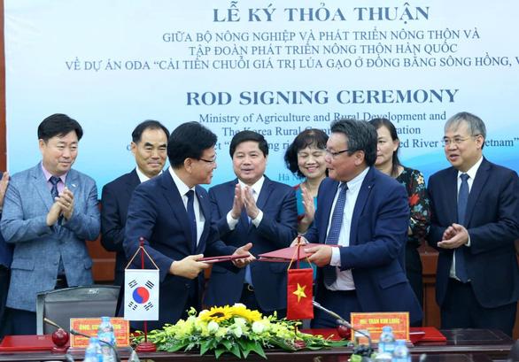 Hàn Quốc hỗ trợ 4,5 triệu USD nâng chất gạo ở Đồng bằng sông Hồng - Ảnh 1.