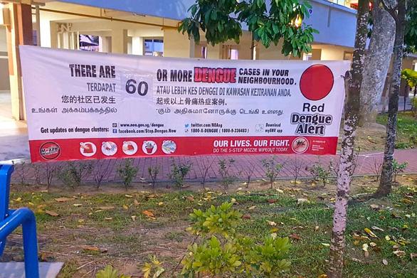 Singapore ghi nhận số ca mắc sốt xuất huyết cao kỷ lục - Ảnh 1.