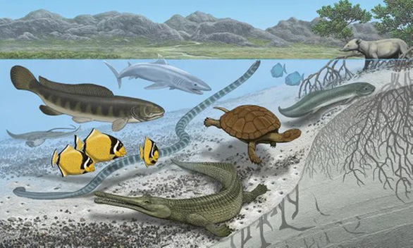 Nhiều loài cá khổng lồ từng sống tại sa mạc Sahara? - Ảnh 1.