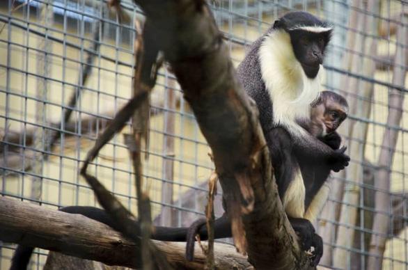 Con người đẩy thêm 7.000 loài đến bờ vực tuyệt chủng - Ảnh 1.