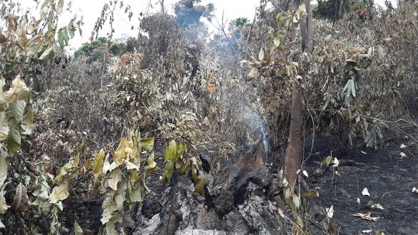 Cận cảnh rừng Hà Tĩnh tan hoang sau 3 ngày đêm cháy như biển lửa - Ảnh 3.