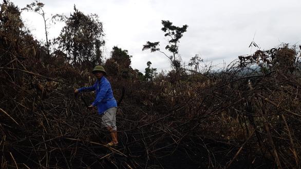 Cận cảnh rừng Hà Tĩnh tan hoang sau 3 ngày đêm cháy như biển lửa - Ảnh 5.