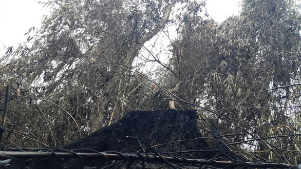 Cận cảnh rừng Hà Tĩnh tan hoang sau 3 ngày đêm cháy như biển lửa - Ảnh 6.