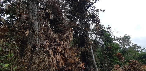 Cận cảnh rừng Hà Tĩnh tan hoang sau 3 ngày đêm cháy như biển lửa - Ảnh 8.