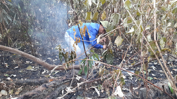 Cận cảnh rừng Hà Tĩnh tan hoang sau 3 ngày đêm cháy như biển lửa - Ảnh 7.