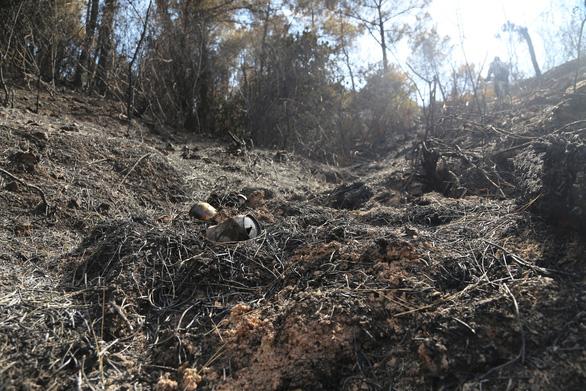 Cận cảnh rừng Hà Tĩnh tan hoang sau 3 ngày đêm cháy như biển lửa - Ảnh 11.