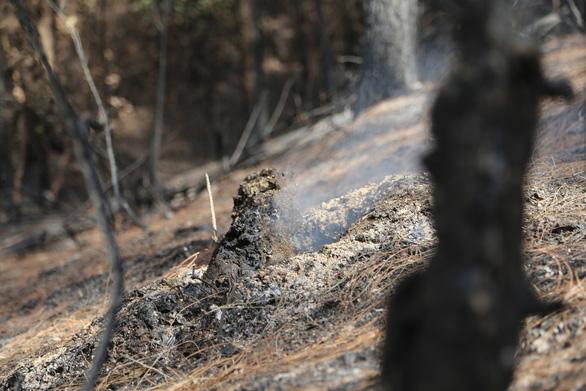 Cận cảnh rừng Hà Tĩnh tan hoang sau 3 ngày đêm cháy như biển lửa - Ảnh 9.