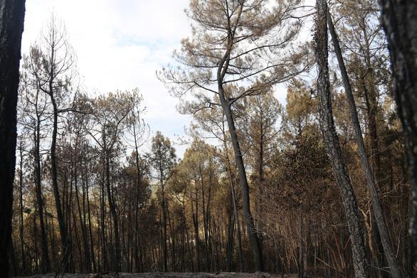 Cận cảnh rừng Hà Tĩnh tan hoang sau 3 ngày đêm cháy như biển lửa - Ảnh 10.