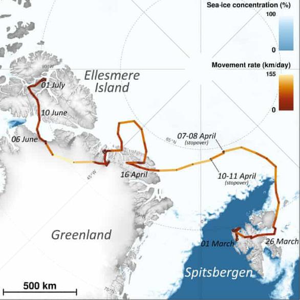 Sửng sốt cáo tuyết vượt 3.500km chỉ trong 76 ngày - Ảnh 3.