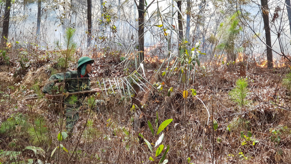 Cháy lớn ở rừng thông đặc dụng tại Huế, 1.000 người đang khống chế - Ảnh 1.