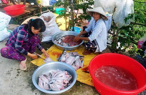 Cá lóc phơi khô trên đường về Hồng Ngự  - Ảnh 3.