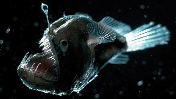 Kỳ lạ loài cá mập bỏ túi có thể phát sáng - Ảnh 2.