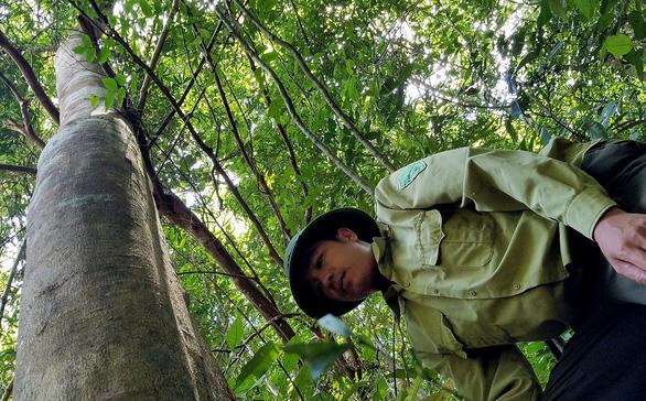 Bảo vệ rừng… bỏ rừng vì bị nợ lương - Ảnh 1.