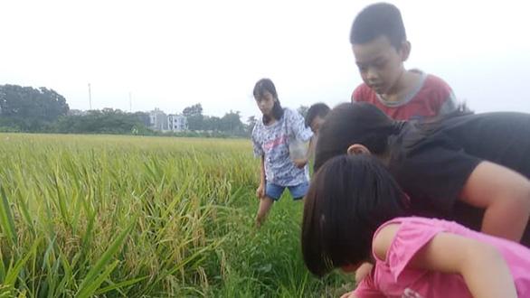 Mùa hè đưa trẻ ra đồng - Ảnh 1.