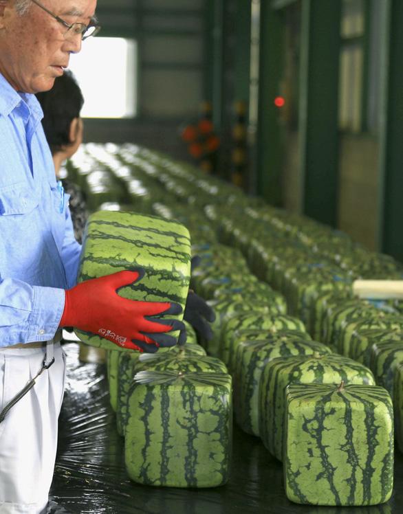 Thành phố nhỏ ở Nhật trồng dưa hấu vuông, bán giá khổng lồ - Ảnh 3.