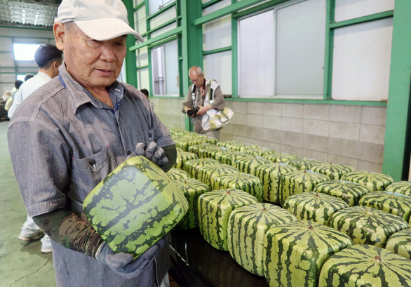 Thành phố nhỏ ở Nhật trồng dưa hấu vuông, bán giá khổng lồ - Ảnh 1.