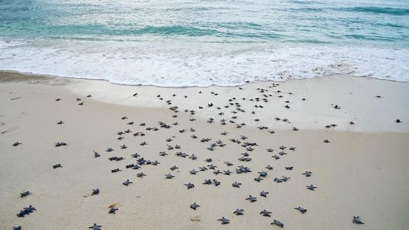 Xúc động ngày tình nguyện đỡ đẻ cho rùa biển Côn Đảo - Ảnh 1.