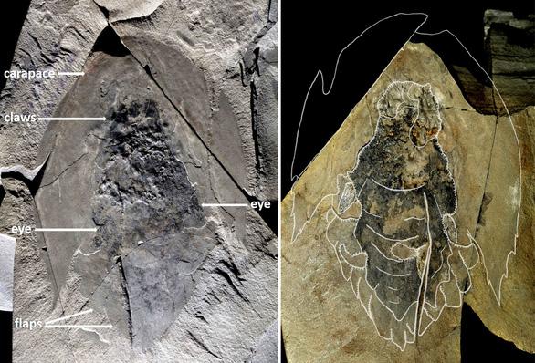 Phát hiện hàng trăm hóa thạch sinh vật biển có đầu như tàu vũ trụ - Ảnh 1.