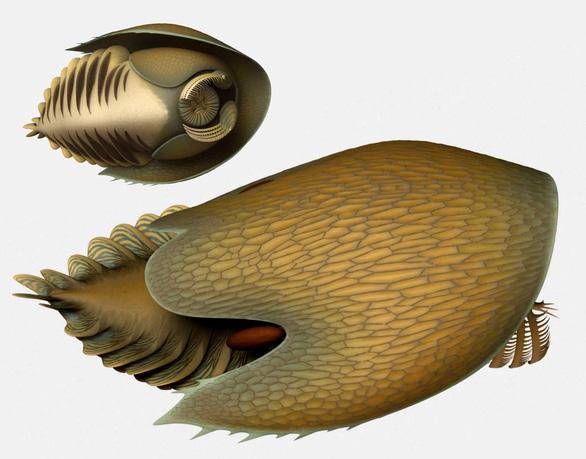 Phát hiện hàng trăm hóa thạch sinh vật biển có đầu như tàu vũ trụ - Ảnh 2.