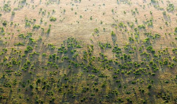Trồng hơn 353 triệu cây trong 12 giờ để chống biến đổi khí hậu - Ảnh 2.