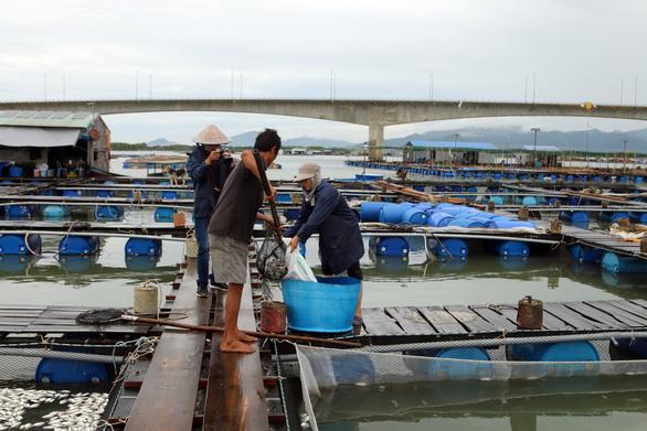 Hai ba năm qua sống khỏe, cá bè Long Sơn lại bất ngờ chết hàng loạt - Ảnh 2.